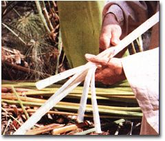 How Egyptian Papyrus is Harvested